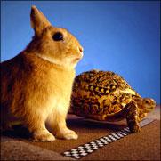 http://sergiot2.com/blogimages/2009/02Feb/06-Tortuga-Lenta-o-Liebre-Rapida.jpg